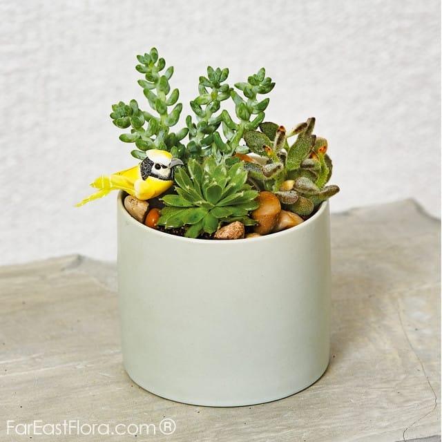 Graduation Bouquets for him - Far East Flora
